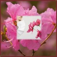 Les fleurs du printemps mars 2020