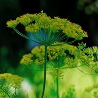 Confinement :  soutien de Guy Gusmano  avec des fleurs