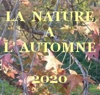 La nature à l'automne 2020