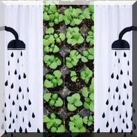 Amis jardiniers, à vos Corona légumes !
