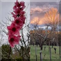 AUCH : les splendides couleurs d'un jardin et d'un soir