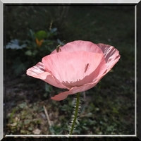 Le jardin de Janine à Auch en fleurs